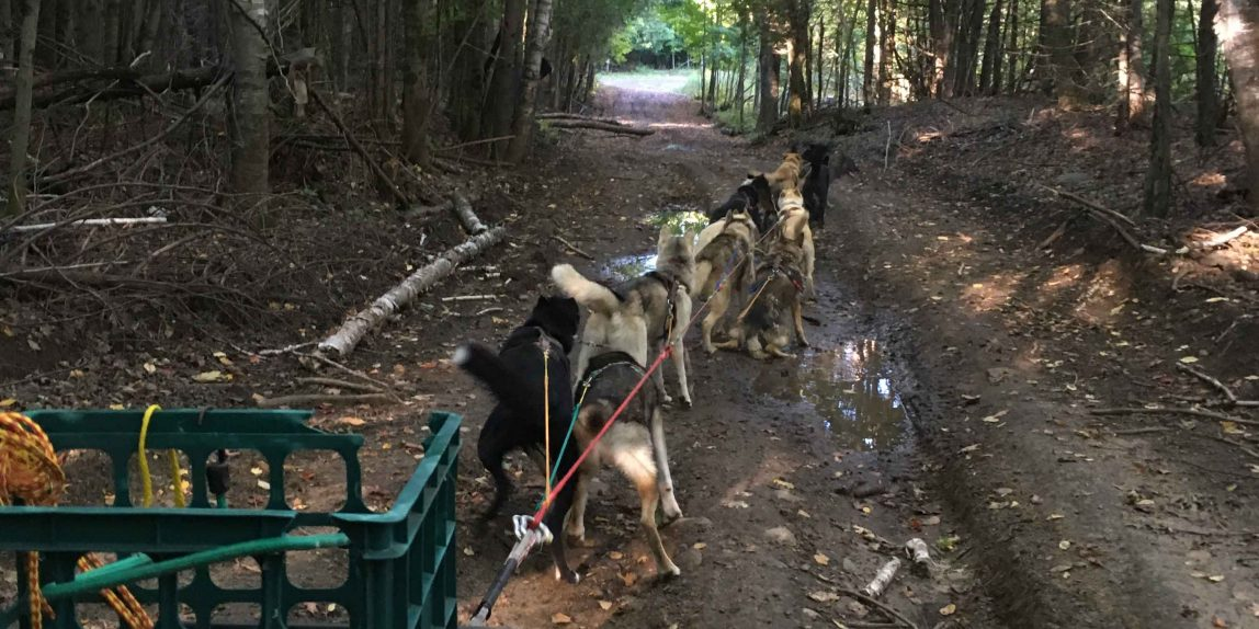 StinkyPup Fall mushing with sled dogs in L'Amable, Ontario