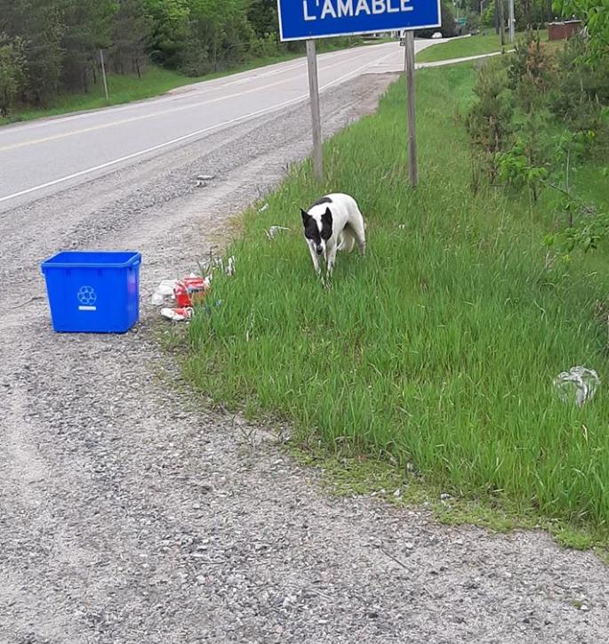 Yukon on walkabout