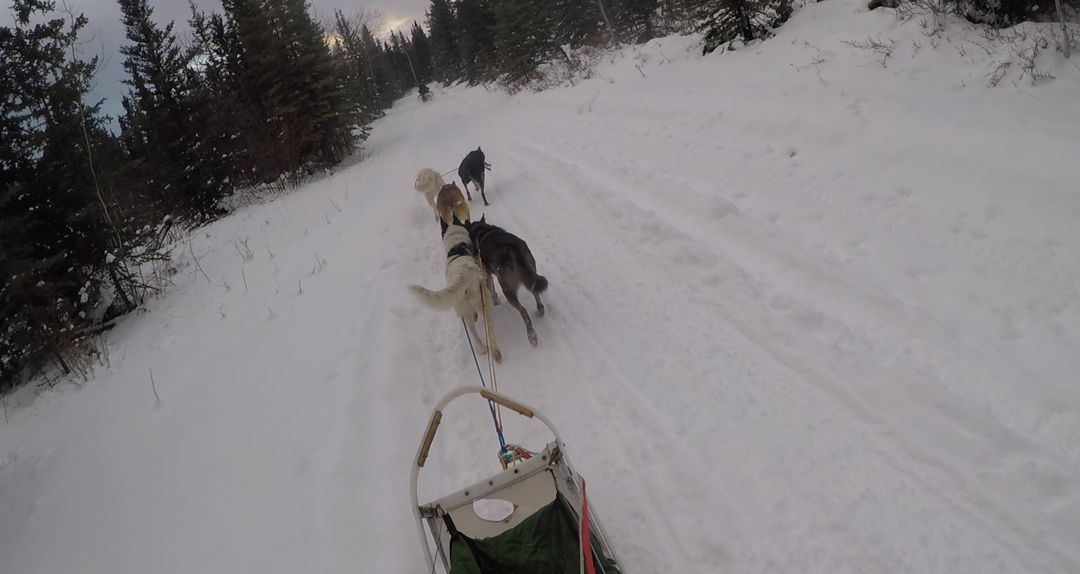 Greg's first mush on a sled in the Yukon on November 11, 2020